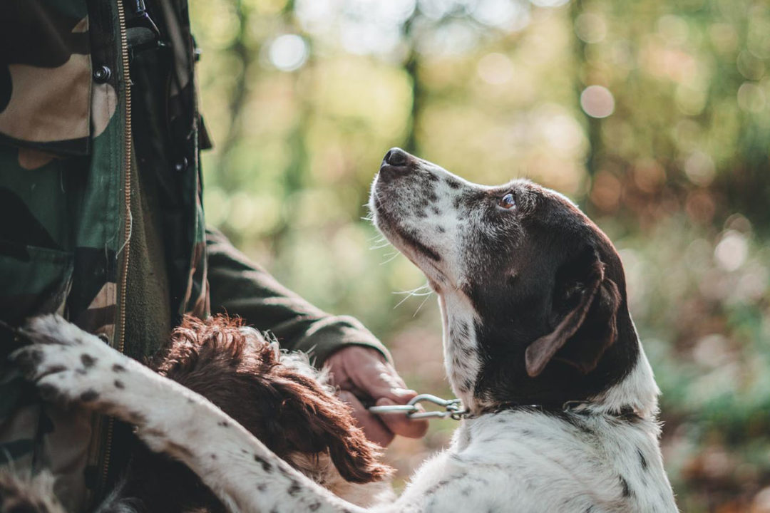 perros trufa