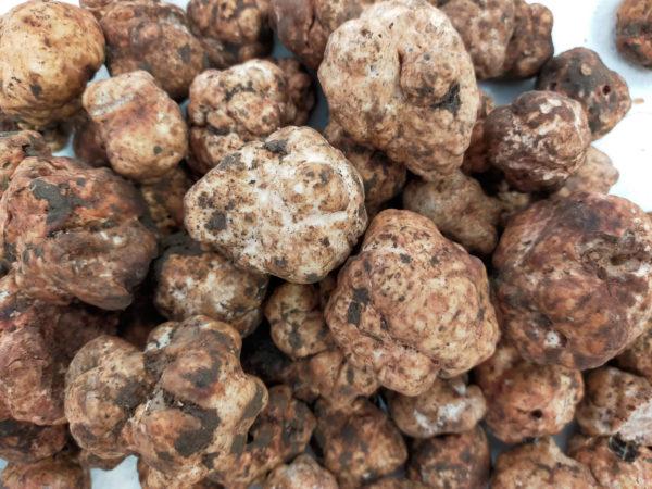 trufbox trufa bianchetto tuber borchii granel